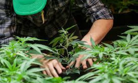 Going Green: Washington's Economy After Legalization